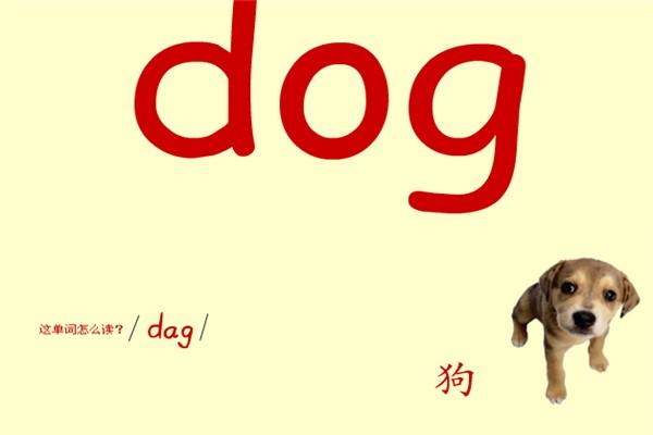 少儿需要学习的关于动物的英语单词介绍